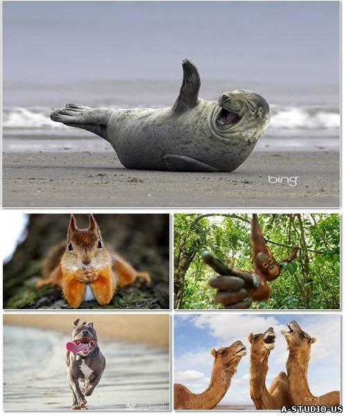 Веселые картинки с животными для фона рабочего стола 3. фото приколы. беспл